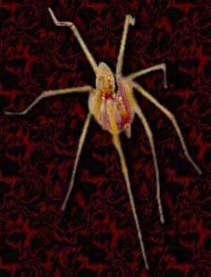 haunted portrait spider